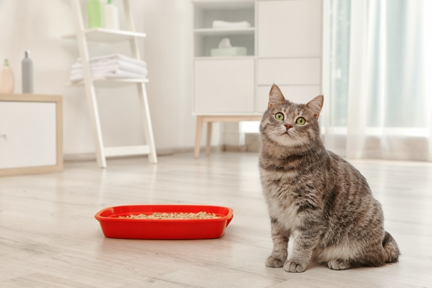 Cat with Cat Litter Tray